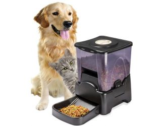feeder dog a lab picks beside hungry with bowl written top reviews paw best feeders in pet automatic for empty
