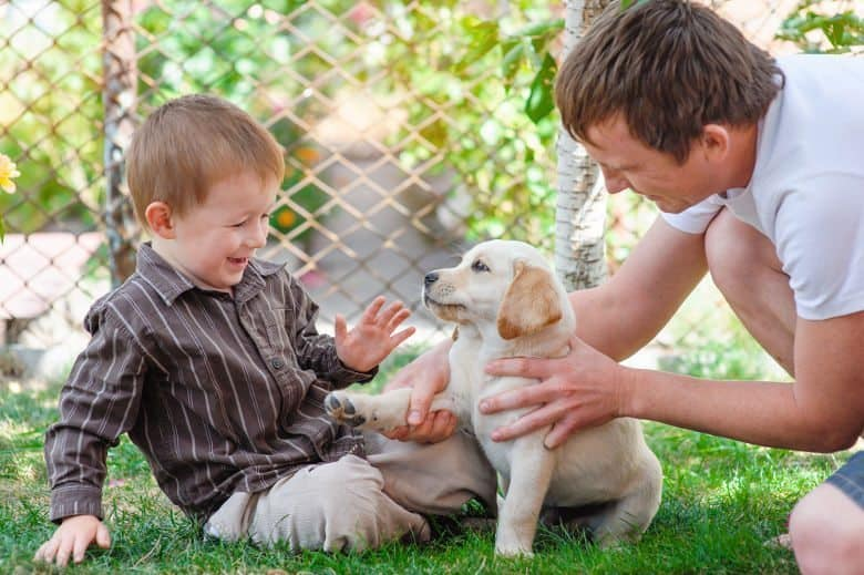 father and son playing with a labrador puppy on grass