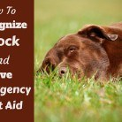 Shock in Dogs - The Symptoms and Emergency Treatment