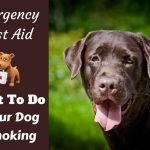 What To Do If Your Dog is Choking - How to Help in an Emergency