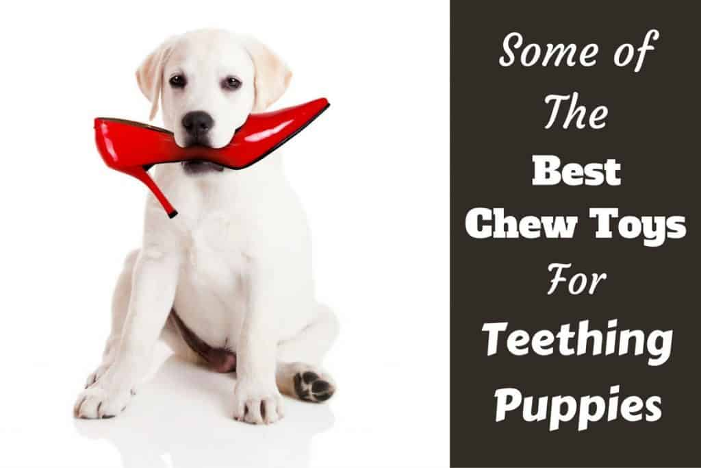 Toys For Teething : Best chew toys for puppies while teething