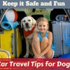 Car Travel Tips for You and Your Dog - To Stay Safe and Enjoy It
