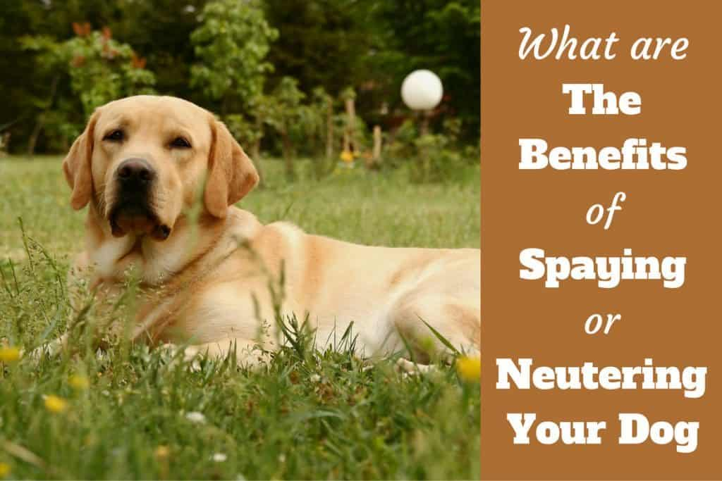 Why Pet Owners Should Spay and Neuter Their Pets Essay