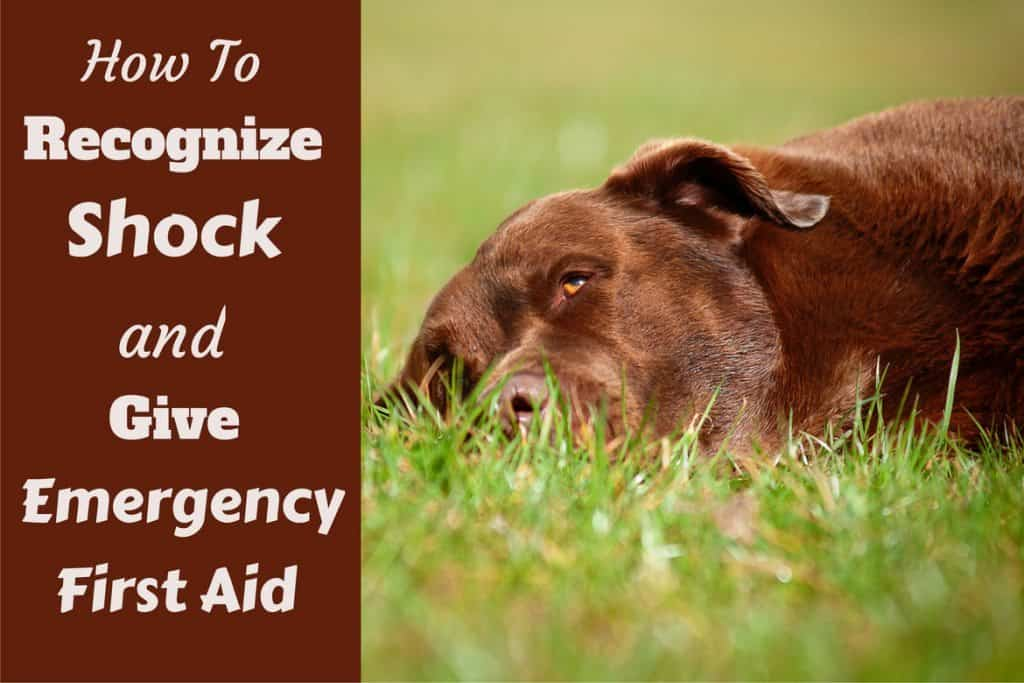 How Often Can You Give Your Dog Advil