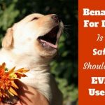 Benadryl for Dogs - Can you Give it? Is it Safe? What Dosage?