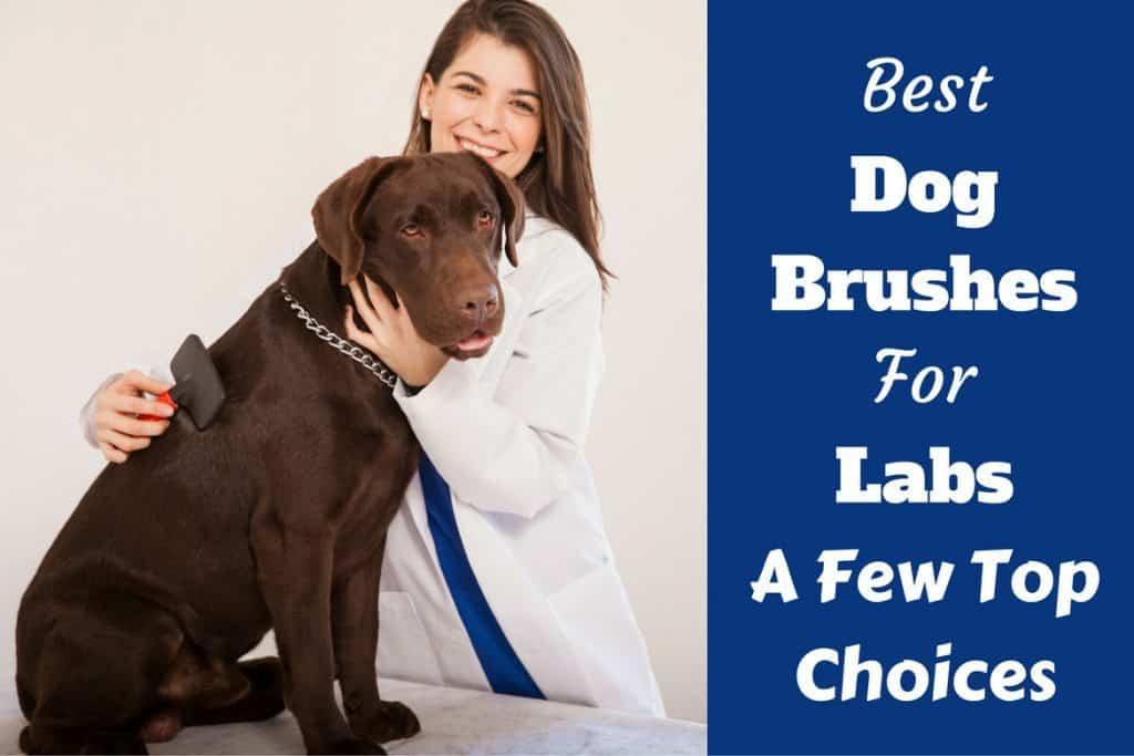 Best Dog Bones For Labs
