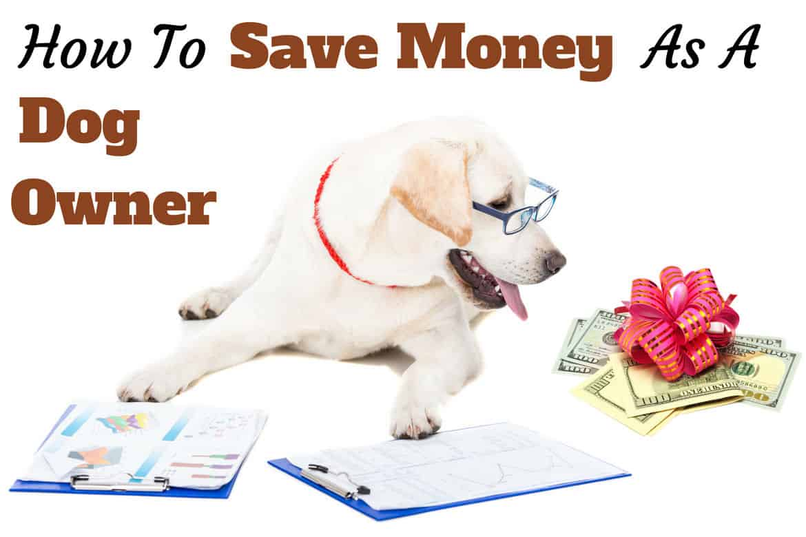 How to save money as a dog owner written beside a bespectabled yellow lab with clipboard staring at money