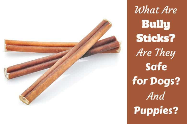 What is a bully stick written beside a few next to apencil on white background