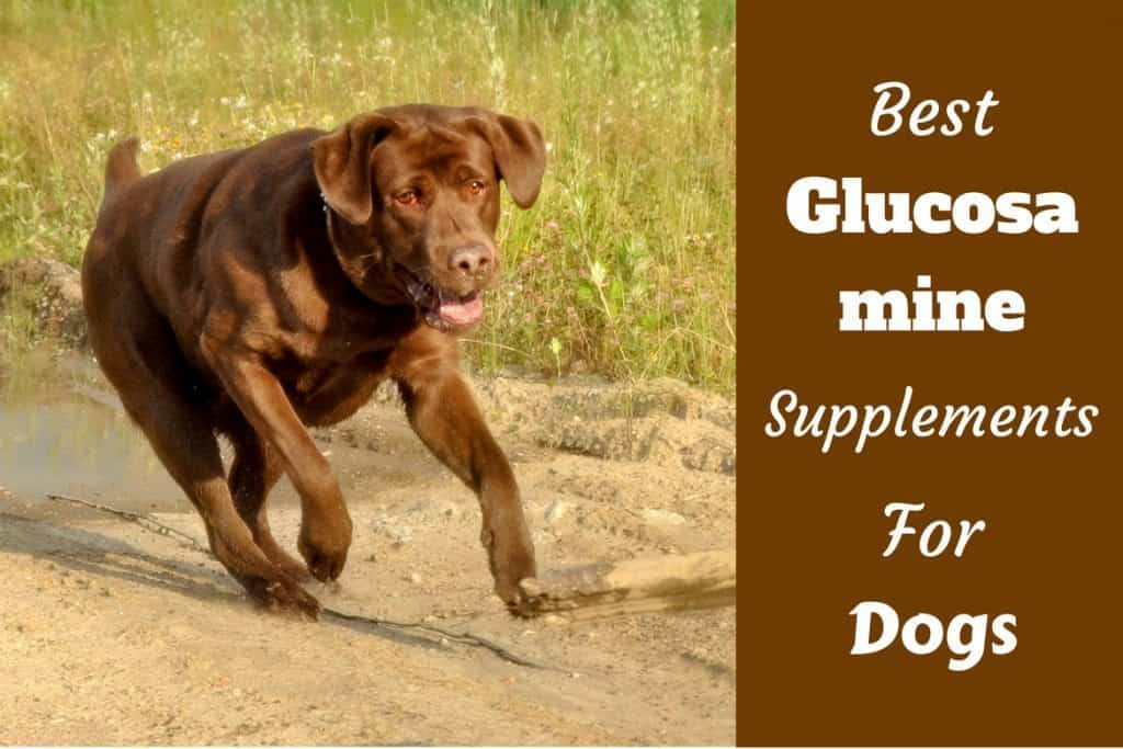 Can Dogs Have Glucosamine