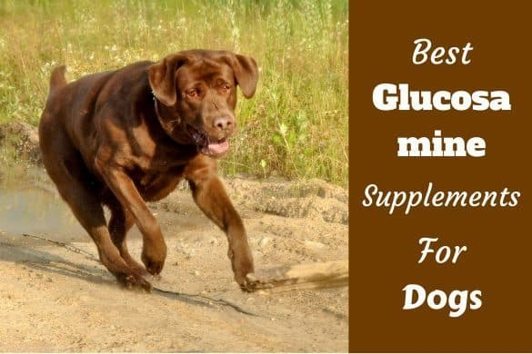 Best Glucosamine for dogs written beside a chocolate lab running
