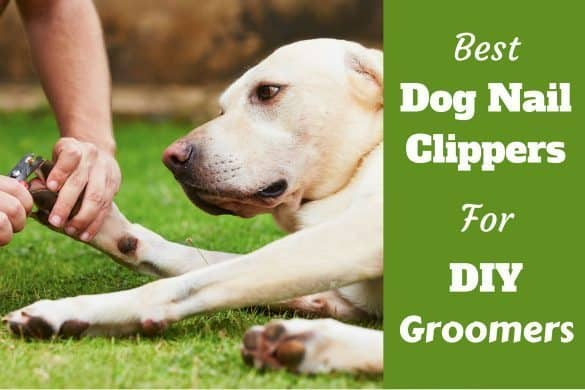 Best dog nail clippers written beside a labrador having nails clipped on grass