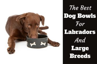 Best Bowls for labs and large breeds written beside two dogs isolated on white
