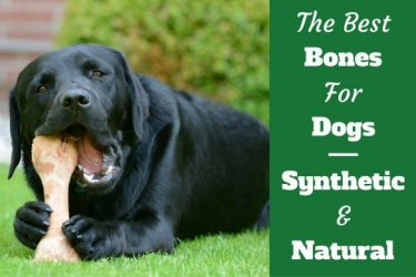 Best dog bones written beside a black labrador chewing a bone lying on grass