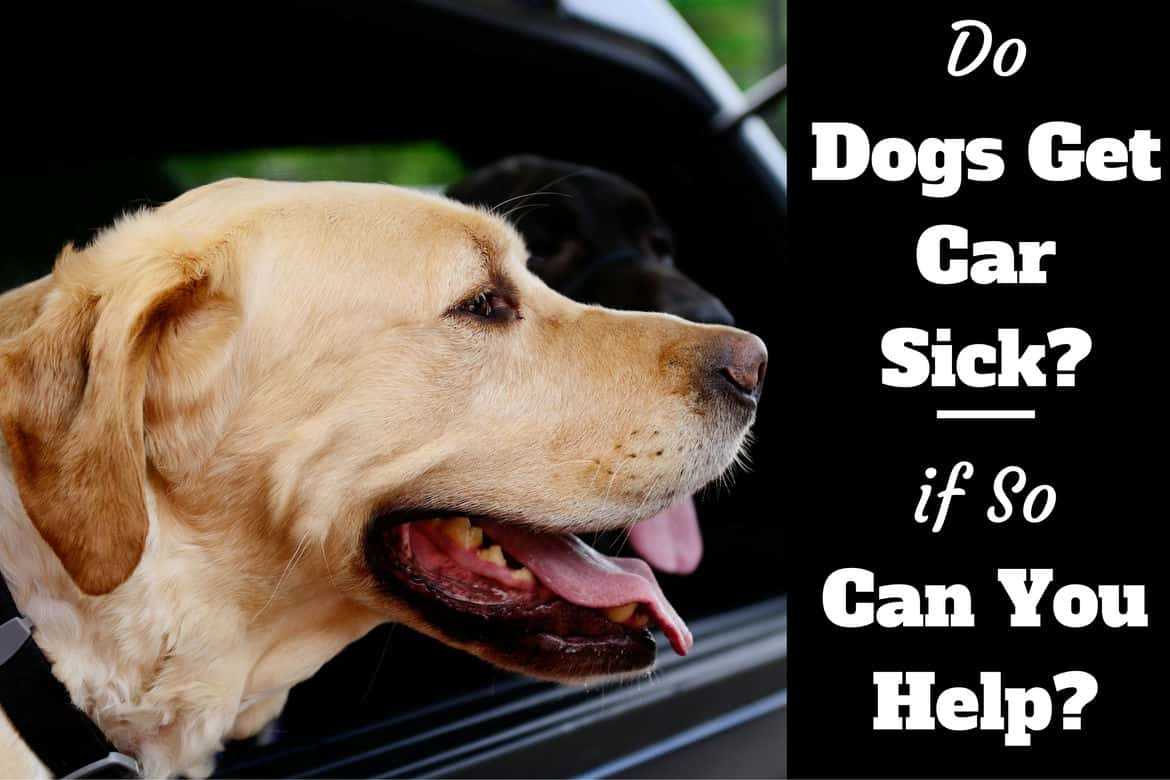 do dogs get car sick? they do! here's how to help them