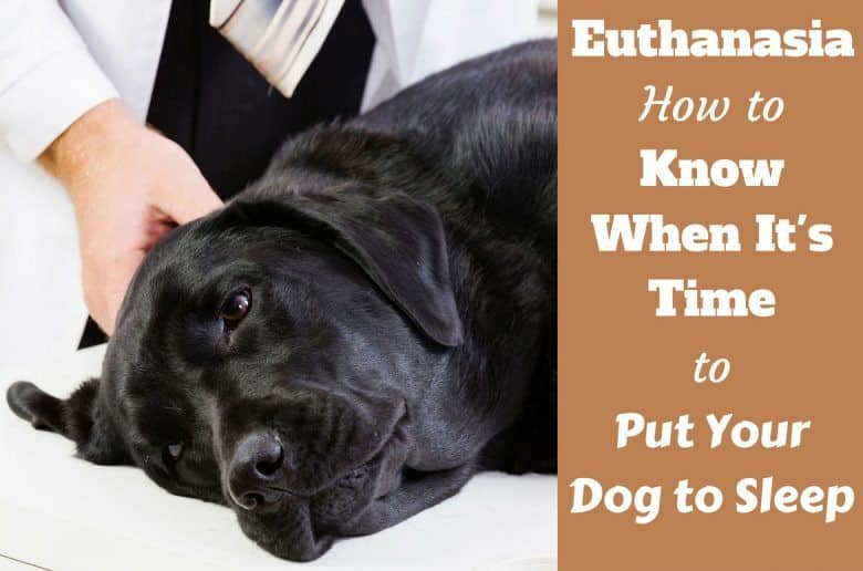 when to put your dog down written beside a peacefully sleeping labrador on a vet's table
