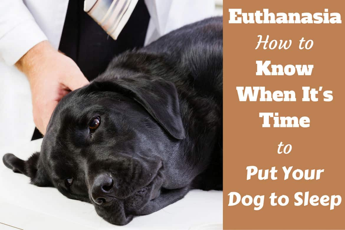 Euthanasia how to know when its time to put your dog down when to put your dog down written beside a peacefully sleeping labrador on a vets table solutioingenieria