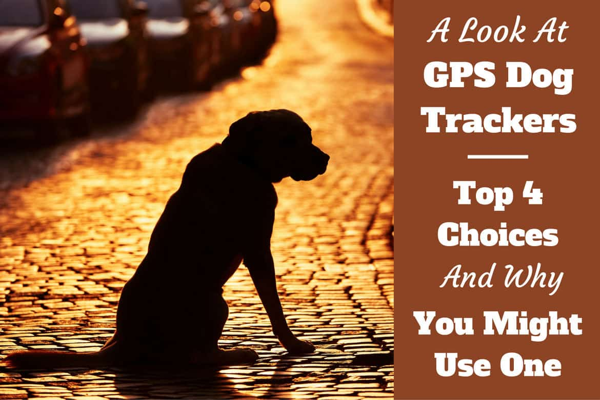 Best gps dog trackers written beside what looks like the silhouette of a lost street dog