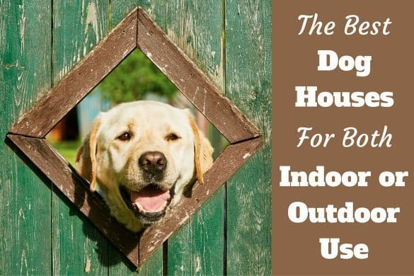 The best dog houses, written beside a yellow labrador poking it's head through a triangle opening in a green fence