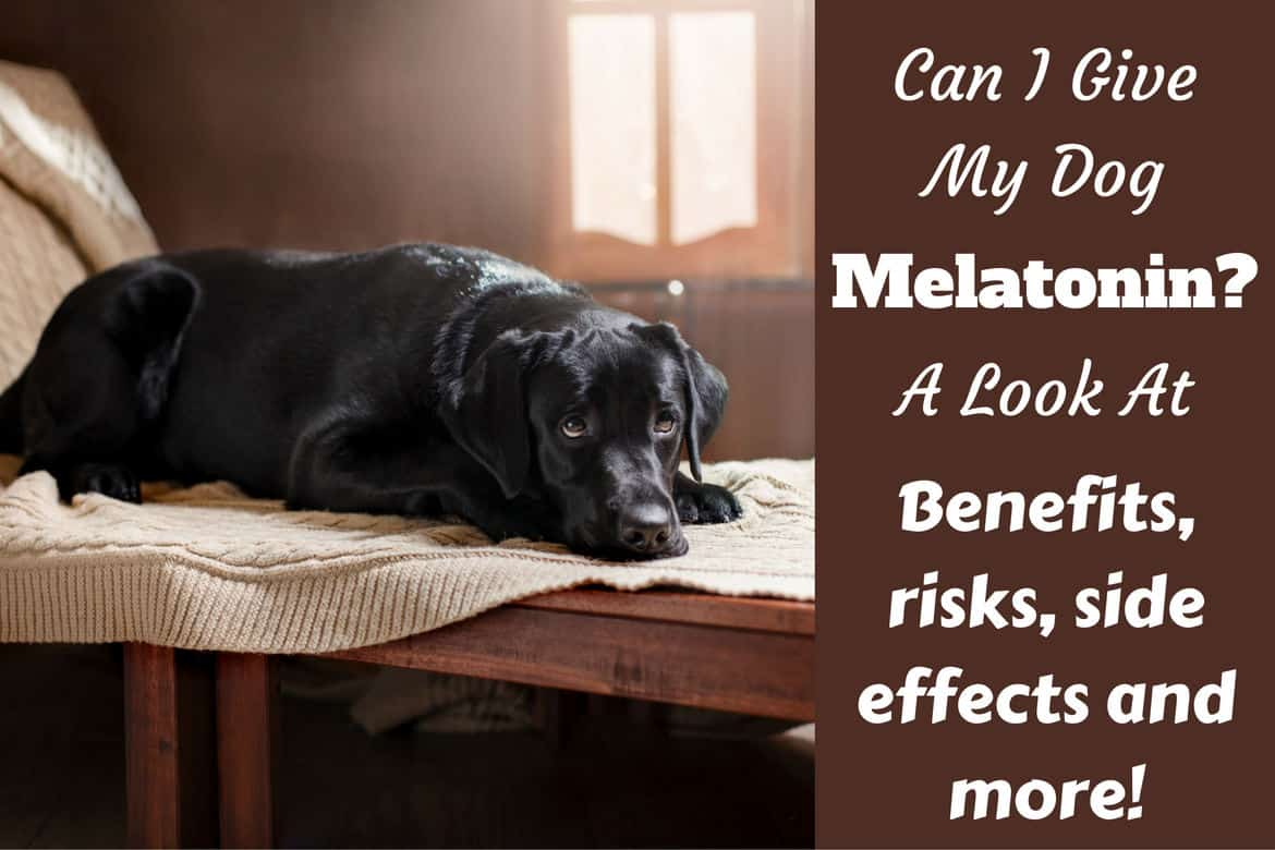 Can I Give Melatonin To A Dog