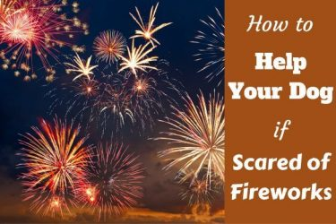 How to help your dog if scared of fireworks written beside a sky full of a display