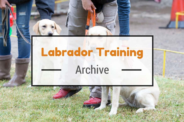 Labrador training articles written across an obedience training class
