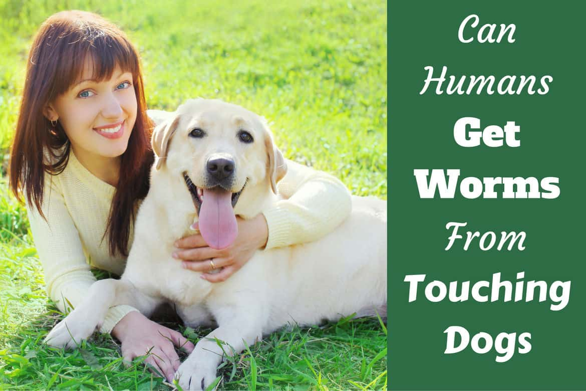Can humans get worms from dogs written beside a lady hugging a labrador