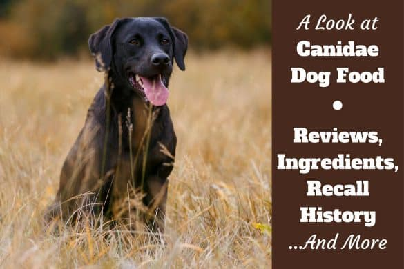 Canidae dog food reviews, ingredients and recall history written beside a black lab sitting in a dried grass field