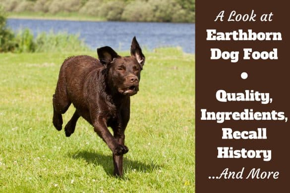 A look at earthborn dog food ingredients and recall history written beside a chocolate lab running on grass