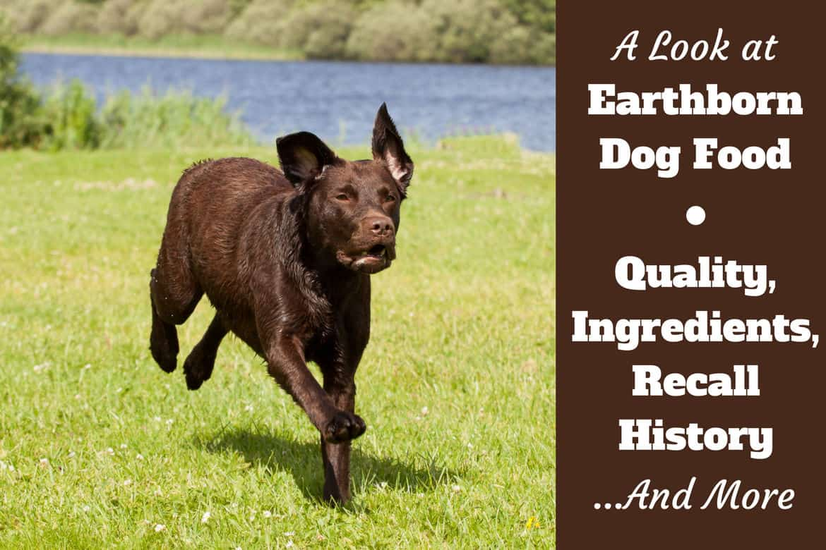 Earthborn Dog Food Reviews Ingredients Recall History And Our Rating
