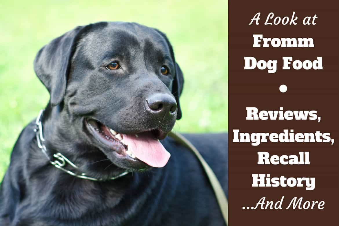 Fromm dog food reviews and recall history written beside a black lab looking to camera with tongue out