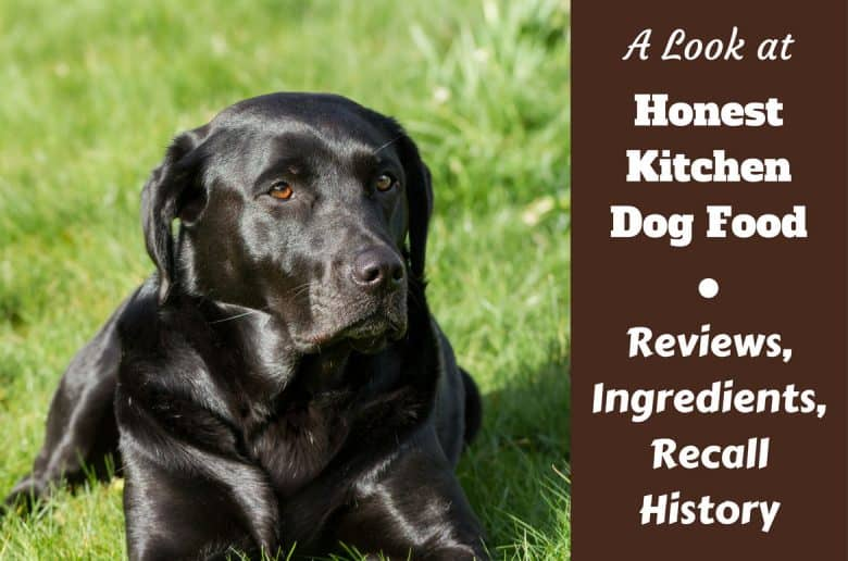 Honest Kitchen dog food review, ingredients and recall history written beside a black lab on grass looking to camera with a very glossy coat