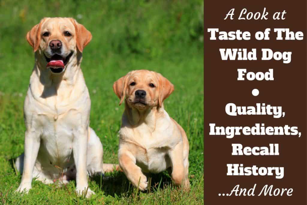 Taste Of The Wild Dog Food Recall