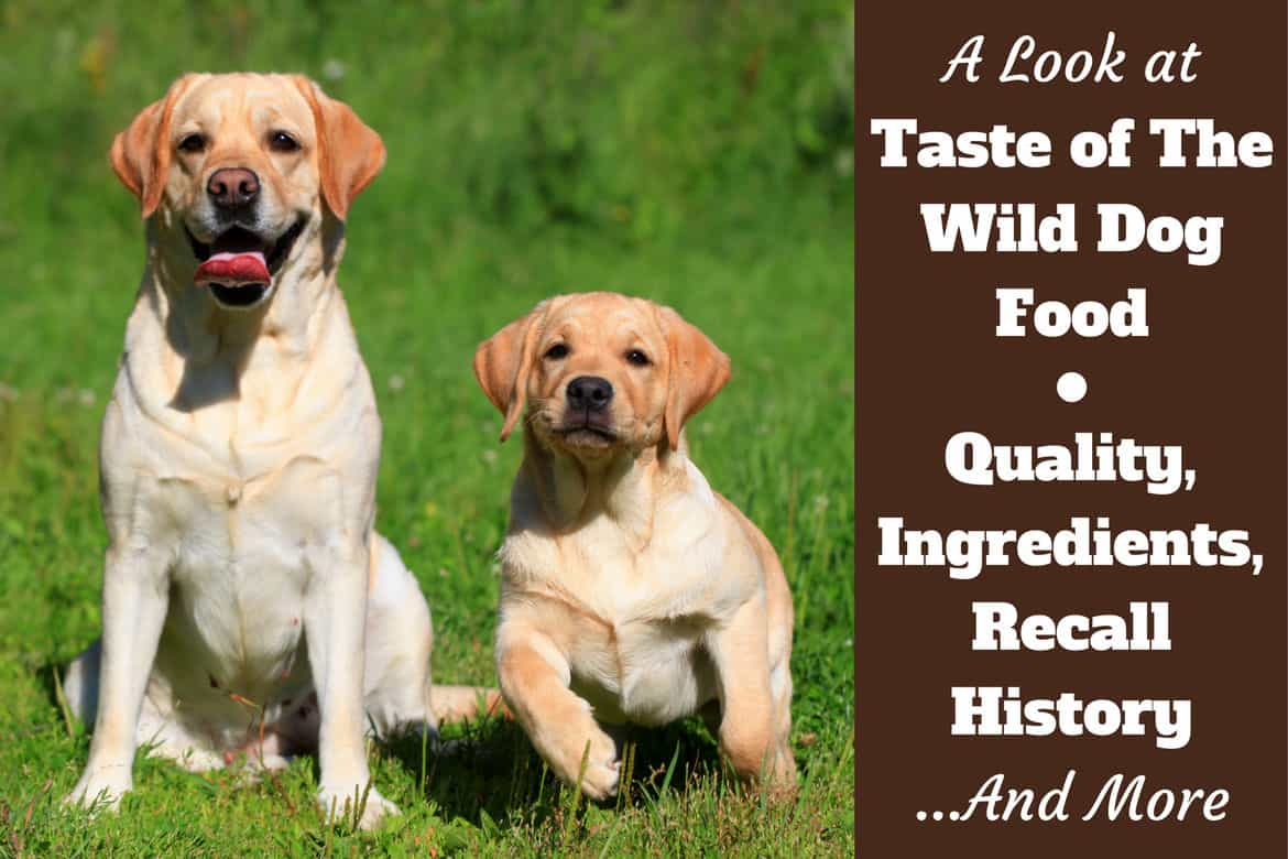 Taste of the wild reviews, ingredients and recall history written beside Yellow mother and puppy labradors sitting on grass