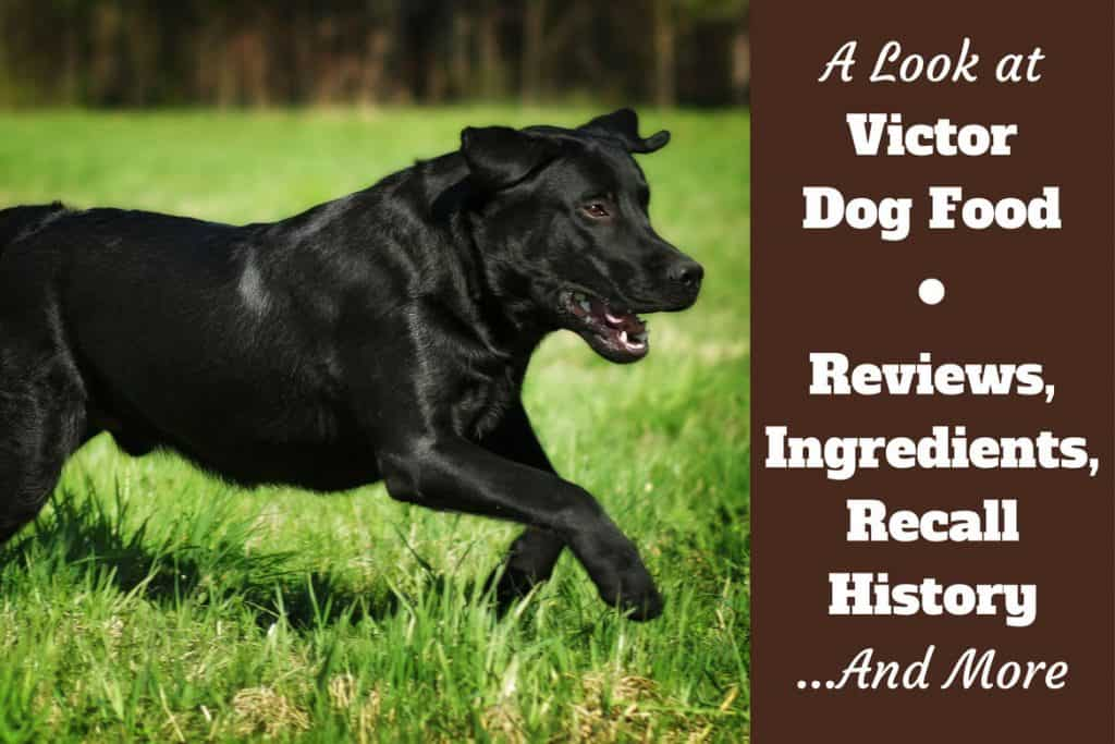 Victor Dog Food Reviews Ingredients Recall History And Our Rating