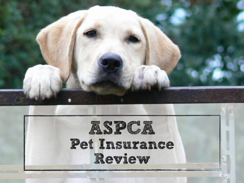 ASPCA Pet Insurance Review: Coverage by a 150-Year-Old ...