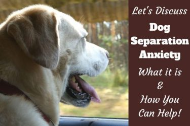 Let's discuss dog separation anxiety written beside a yellow lab staring out of a window