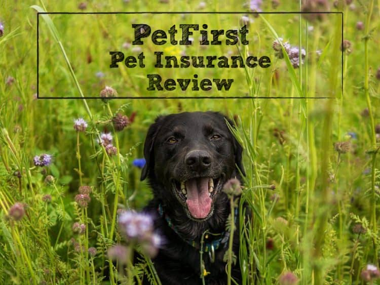 PetFirst Insurance Review: Great When You've Got 2 or More Pets