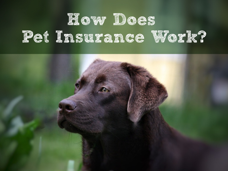 How Does Pet Insurance Work? An Overview of The 5 Basic Steps