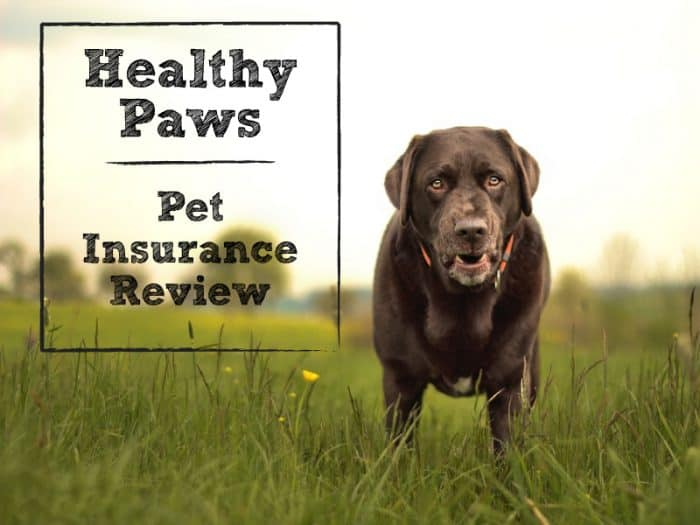Healthy Paws Pet Insurance Reviews  : Healthy Paws Pet Insurance Review: The 1 Plan for Life