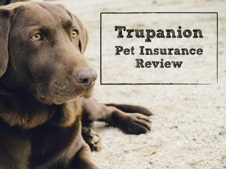 Canadian Pet Insurance For Dogs