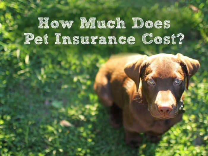 How Much Does Pet Insurance Cost? The 8 Big Factors That Add Up