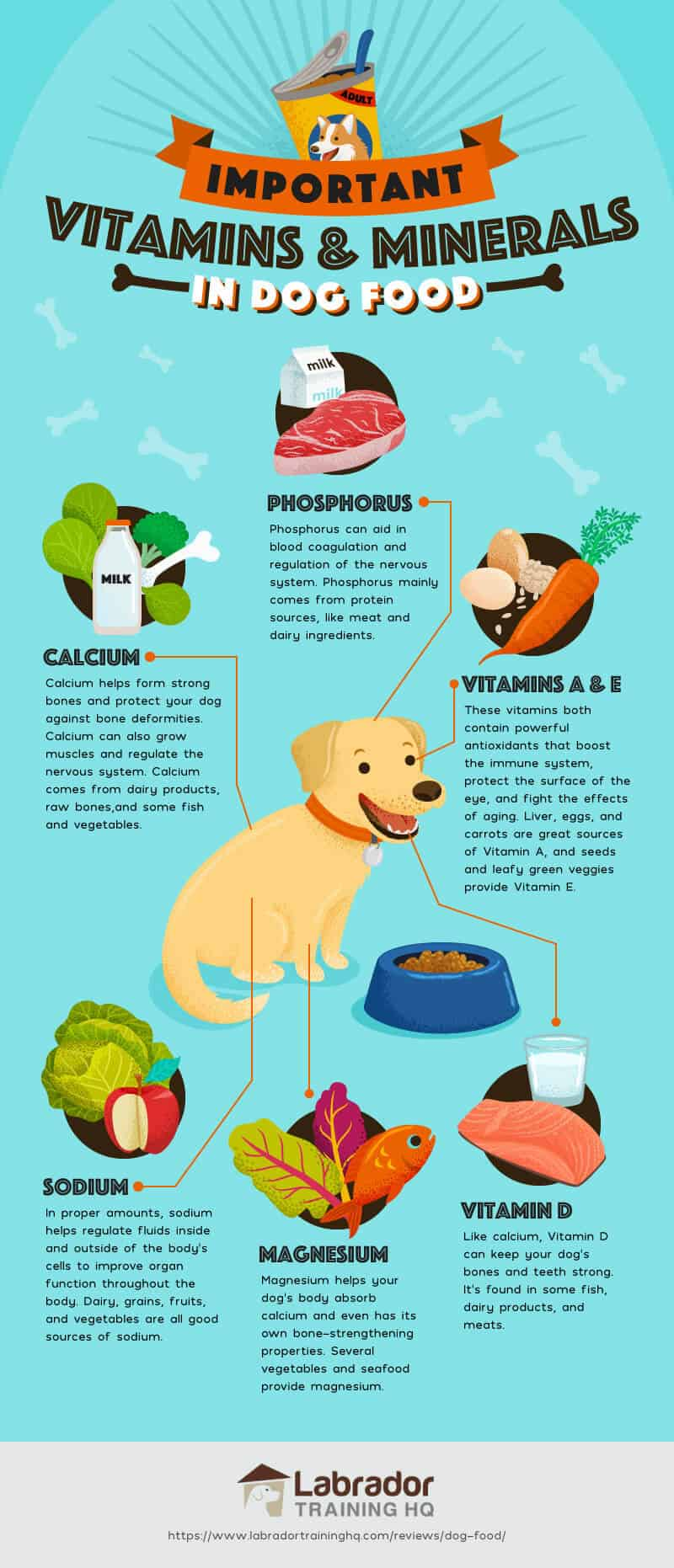 Important Vitamins and Minerals in Dog Food