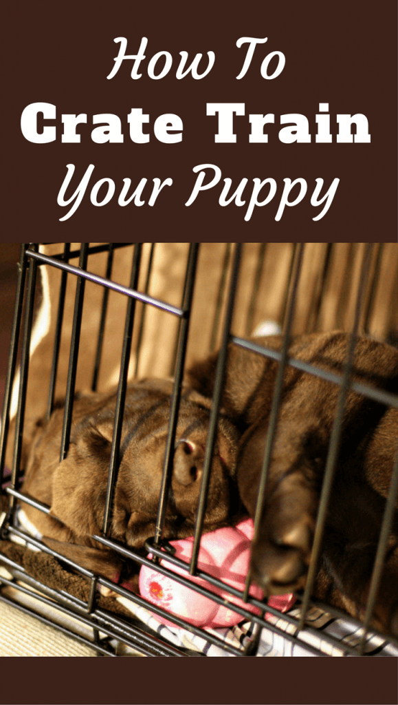 The most thorough, step-by-step guide on how to crate train a puppy you can find. Highly detailed, Including what to do at night and if you work full time.
