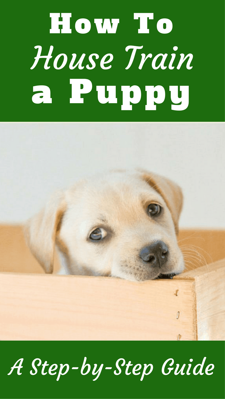 Learn how to house train a puppy fast - and stress free - in this highly detailed guide. Everything you need to know to potty train your puppy is here.