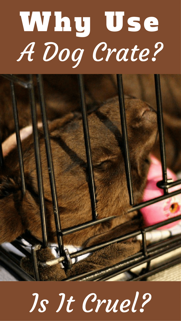 Why use a dog crate? Is it cruel to crate a dog? No! Read to find out the many benefits a crate provides to both you and your dog. It's such a useful tool!