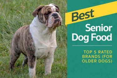 Best Senior Dog Food - Top 5 Rated Brands (For Older Dogs)