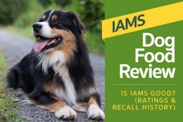 Iams Dog Food Review – Is Iams Good? (Ratings & Recall History)