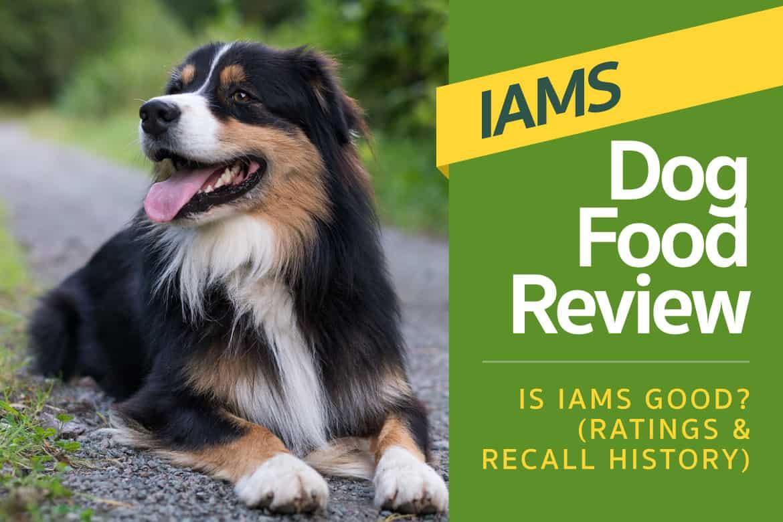 iams dog food reviews