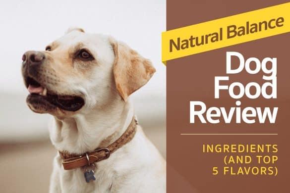 Natural Choice Dog Food Rating