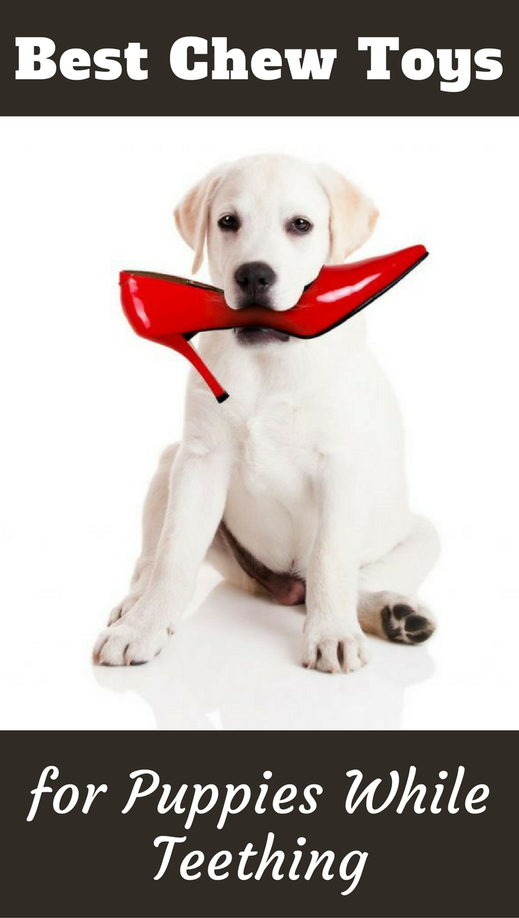 Save your possessions and your sanity by providing some of the best puppy teething toys for your pup to chew on instead. We discuss the top options here.